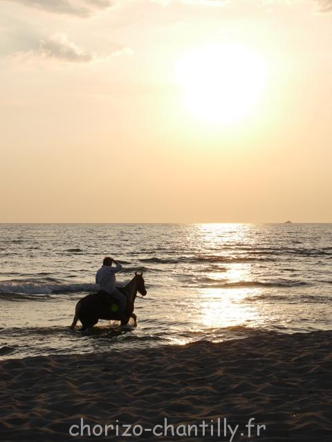 Une promenade rafraîchissante pour les chevaux.